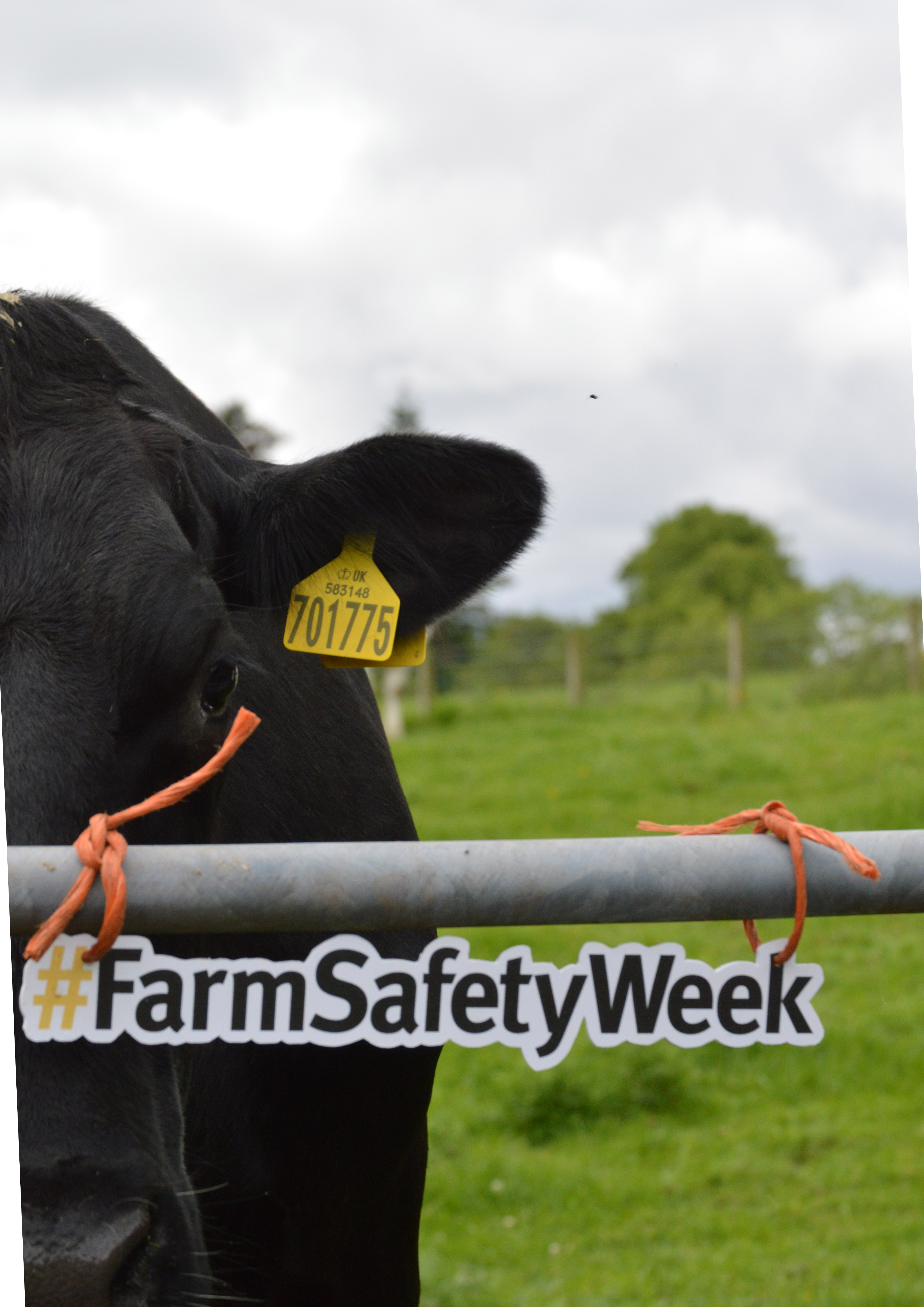 Stay Safe with Livestock