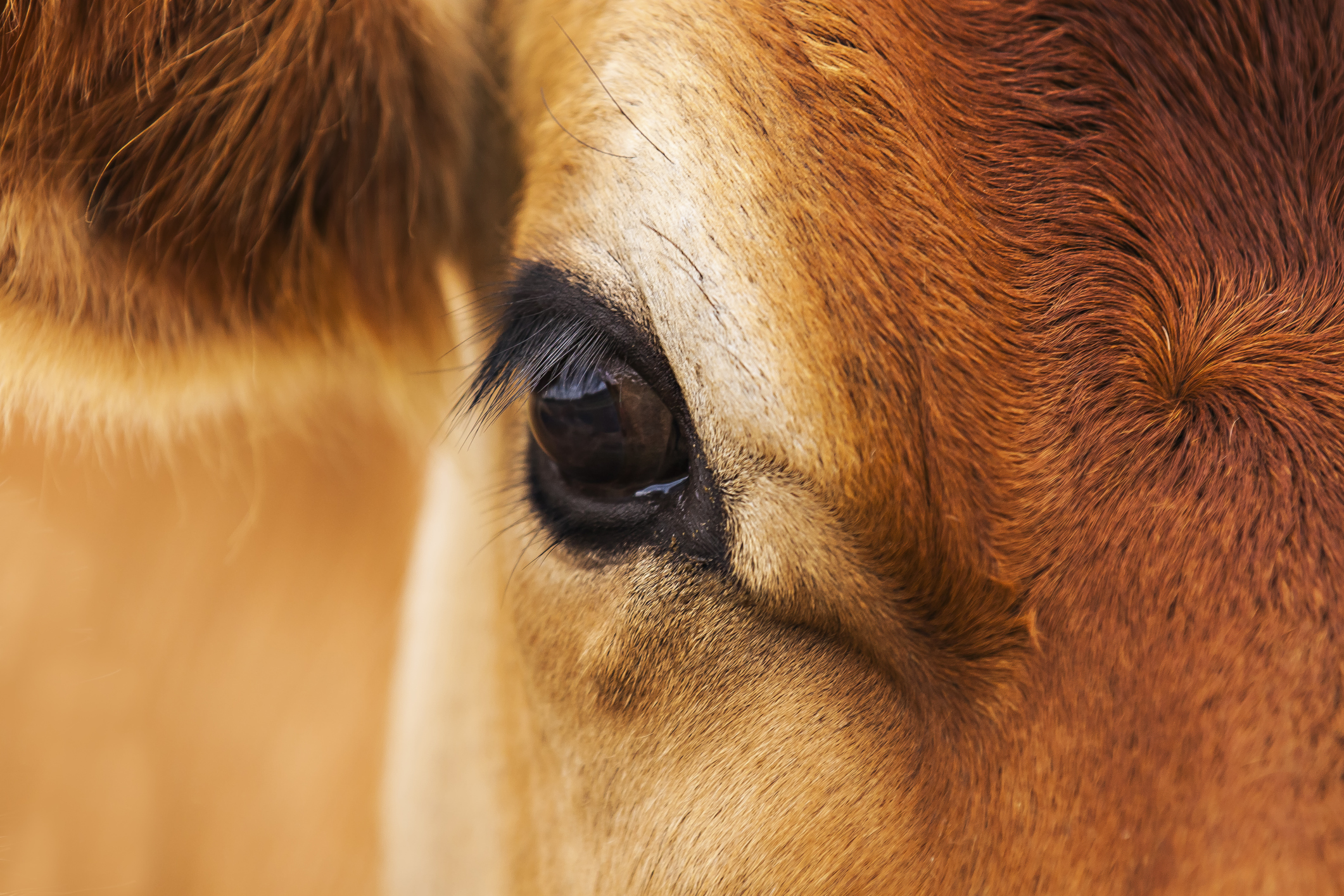 Taking Stock of Livestock